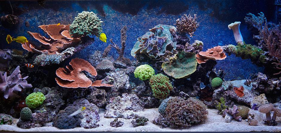 riff aquarium meerwasser 1120 liter allgemein. Black Bedroom Furniture Sets. Home Design Ideas
