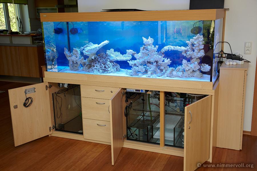200x80x70 cm riffaquarium im wohnzimmer seite 2 mein. Black Bedroom Furniture Sets. Home Design Ideas