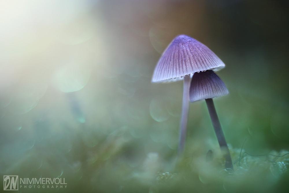 Mushroom Dreamland